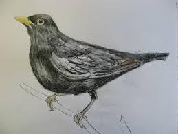 sketchbook birds agnesandcora