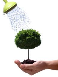 watering the tree specialists inc
