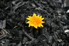 from ashes seventh lent writing from ashes pastor with a purse