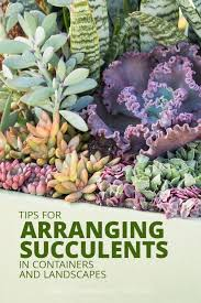 succulent arrangements tips for arranging succulents in containers and landscapes