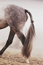 hairstyles for horses 43 best horse hairstyles images on pinterest beautiful horses