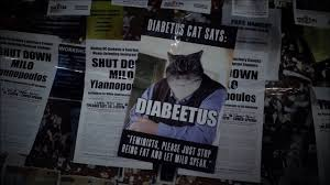 diabetus cat invades uc berkeley triggers snowflake youtube