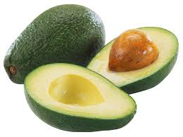 symbolism of a tree the meaning and symbolism of the word avocado