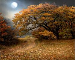 Fall Autumn by 132 Best The Colors Of Autumn Images On Pinterest Autumn Fall