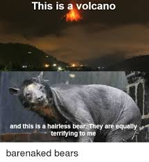 Hairless Bear Meme - this is a volcano and this is a hairless bear they are equally