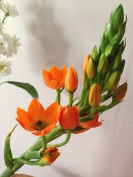 strangers flowers ronnie kuller