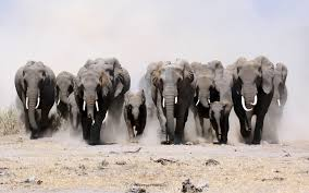 elephant in feng shui is a favorable animal