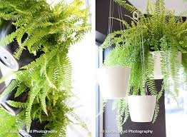 Hanging Planters Indoor by 632 Best Indoor Plants Images On Pinterest Indoor Plants