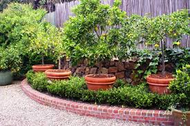 edible ornamentals growing food in plain site in an hoa