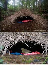 Styles Of Houses To Build Animal Architects Bowerbirds Design U0026 Build Showy Colorful Homes