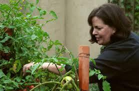 ina garten garden ina garten interview garden mediaite