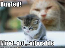 Sad Kitten Meme - cute kitten pictures with captions allofpicts