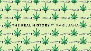 the real history of illegal drugs marijuana