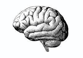 Obat Regumen an a to z of meningitis reader s digest