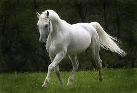 wine legend château cheval blanc a complete bordeaux chateau cheval blanc 1989 wine commanders