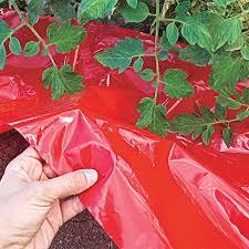 three timely tomato topics feeding seedlings adding calcium