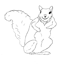 the math fun with squirrels drawing zentangle swan for coloring