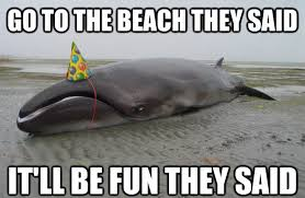 Animal Advice Meme - disgruntled whale with a party hat advice animals know your meme
