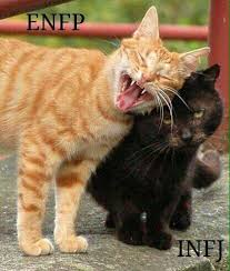 Cute Kitty Memes - when personalities conflict cute kitty meme funny work humor