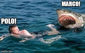 Shark Attack Meme - shark attack meme generator imgflip