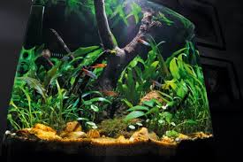 best led light for planted tank 10 planted tank myths practical fishkeeping magazine