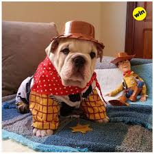 Halloween Costumes English Bulldogs 10 English Bulldog Halloween Costumes Blow
