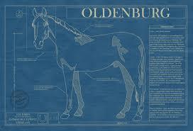 horse blueprints archives animal blueprint company