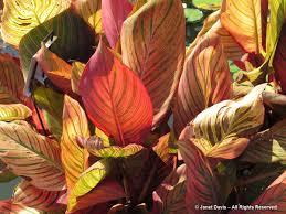 loreena mckennitt janet davis explores colour