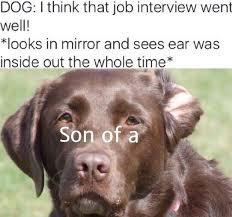 Job Interview Meme - job interview memes