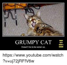 Grumpy Cat Has Died Youtube - 25 best memes about grumpy cat lyrics grumpy cat lyrics memes