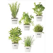 plante aromatique cuisine sticker plantes aromatiques 21 cm x 29 7 cm leroy merlin