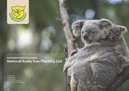 list of native australian plants trees for koalas australian koala foundation