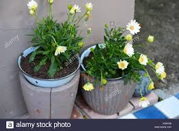 two flowers plants outside of the house stock photo royalty free
