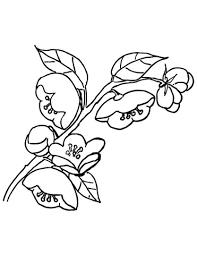 Coloriage  Fleurs de pommier  Coloriages à imprimer gratuits