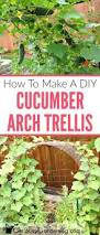 cucumber trellis diy how to make a simple cucumber arch trellis