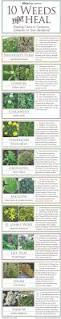 as a reminder u003e 10 common weeds that can heal you yards herbs