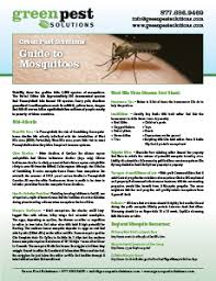 Difference Between Bed Bug Bites And Mosquito Bites How To Tell The Difference Between Spider Bites And Mosquito Bites