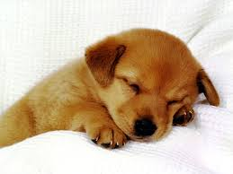 cute backgrounds for kids baby dog photos of simple reasons why we