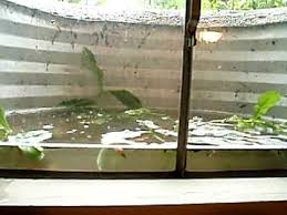 Basement Window Shield by Window Well Fills Up With Water Youtube