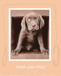 youth wild fine art print puppy photography art prints