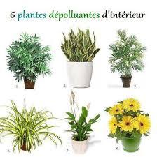 plante d駱olluante chambre plantes vertes et dépollution de l air