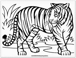 tiger coloring book pages coloring page for kids