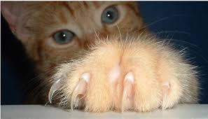 Bed Bugs On Cats Creepy Crawly Preparedness Preparedness Pro