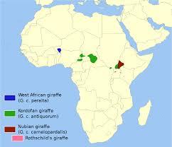 rothschild u0027s giraffe wikipedia