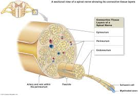 Sole Of The Foot Anatomy Diseases Of The Peripheral Nerves Emedmd Com