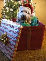 dog christmas giggles a christmas picture that includes a dog with sign