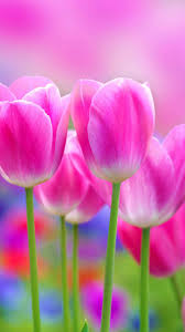 hd images of flowers full hd flowers wallpapers hd wallpapers