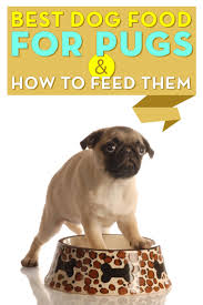 best dog food for pugs how u0026 what to feed pugs u2013 top dog tips