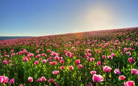 spring meadow hd wallpaper 1514214