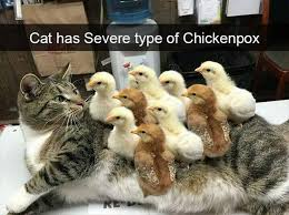 Animal Meme - 23 funny animal memes and pictures of the day cute daily lol pics